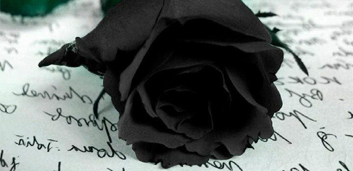 rosa-negra.jpg