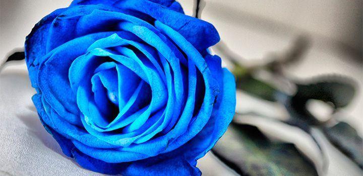 rosas-azules.jpg