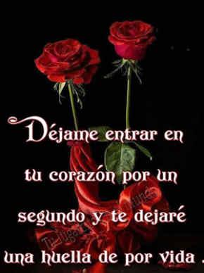 rosas rojas con frases