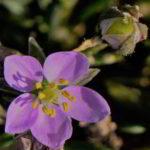 sepalos imagenes de flores partes