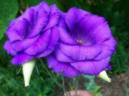 significado de las flores en tatuajes
