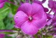 tranquilizantes imagenes de flores violetas
